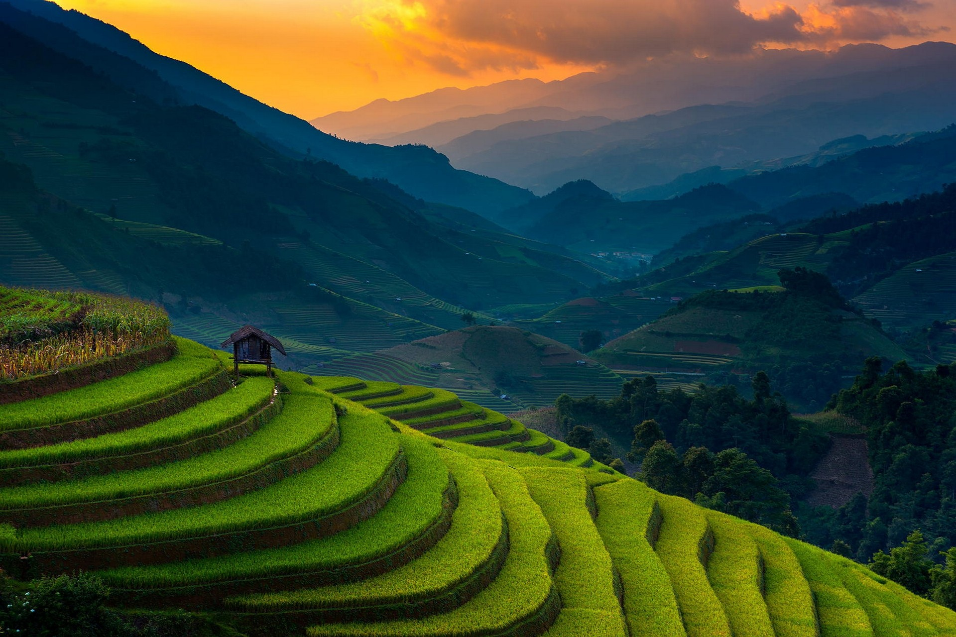 life in north vietnam History of vietnam  and paddy agriculture remains the foundation of the vietnamese way of life to this the bombing of north vietnam ceased and the us pows.